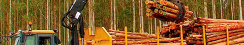 Elementos de protección en la industria forestal